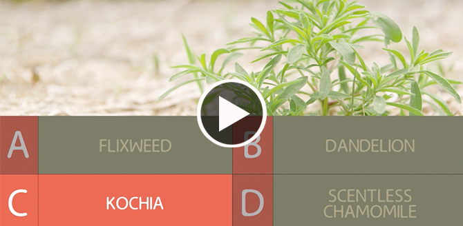 Weed ID Video