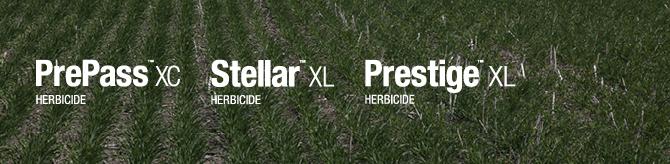 PrePass XC, Stellar XL, Prestige XL