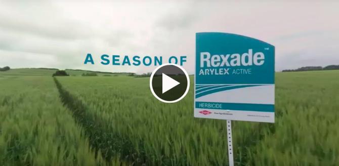 A Season of Rexade
